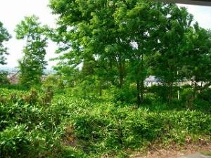 弘前市 アパート 茂森新町スカイハイツ裏自然いっぱい